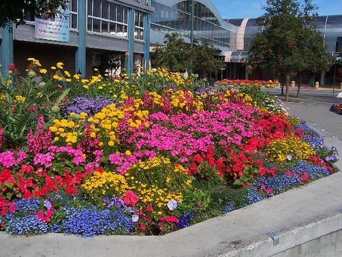 August Flowers In Downtown Anchorage If You Are One Of
