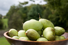 Pawpaws | by starmer