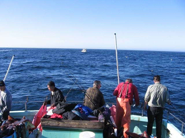 Humboldt squid fishing humboldt squid fishing in the new for Bodega bay fishing reports