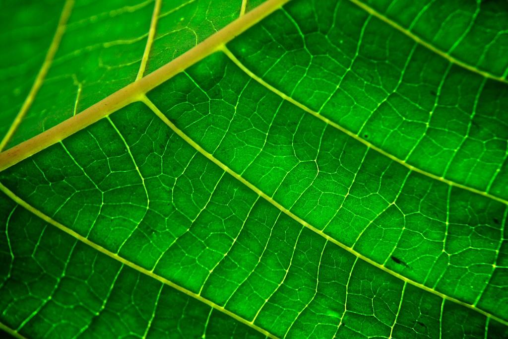 chlorophyll texture | são paulo - sp | anderson mancini | flickr, Skeleton