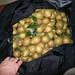 pears_bag