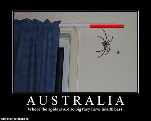 Health Bars Australia Australia-huge-spiders-health