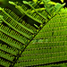 Details of a fern