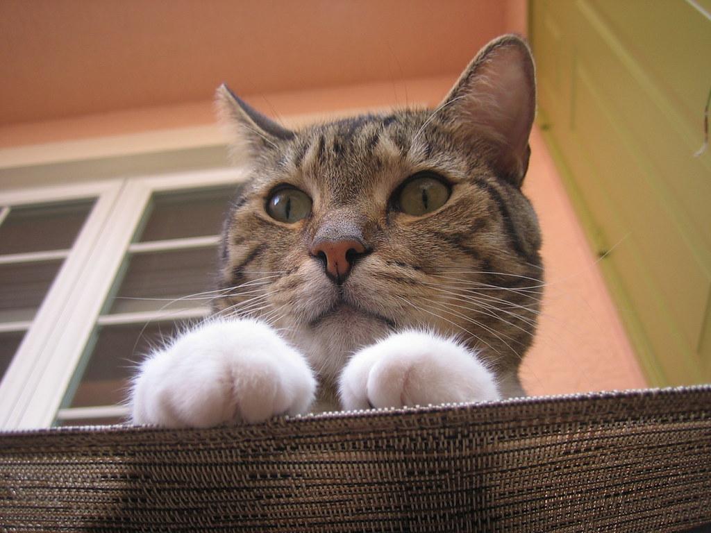 best looking cat