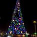 Disney-Hollywood Studios Christmas Tree