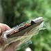 caramel-filled chocolate bar