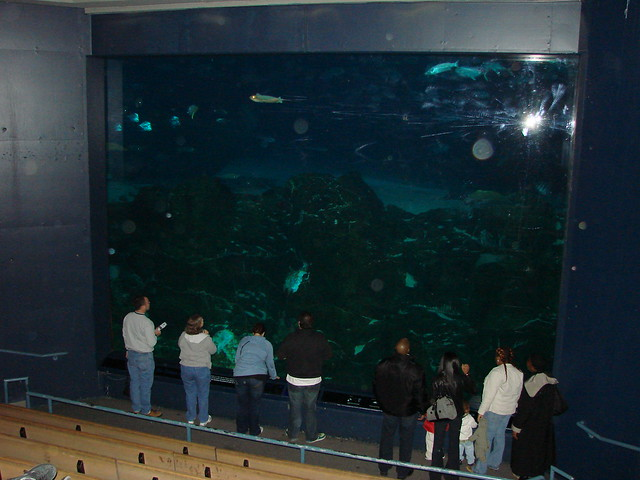 2008 03 16 Camden 028 New Jersey State Aquarium Explore