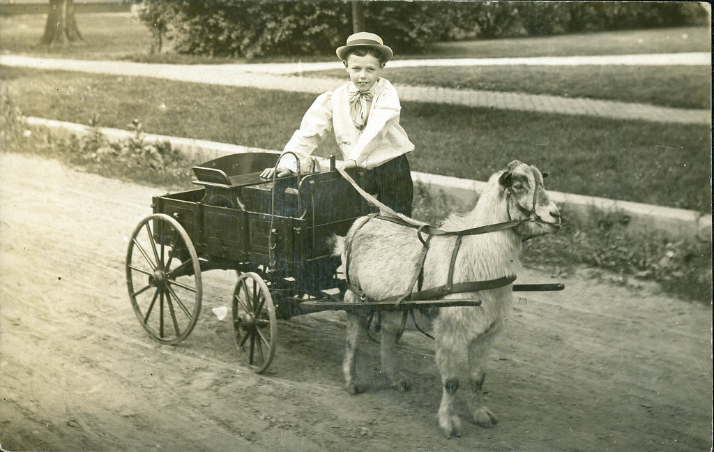 R Goats Goat cart   20090124 S...