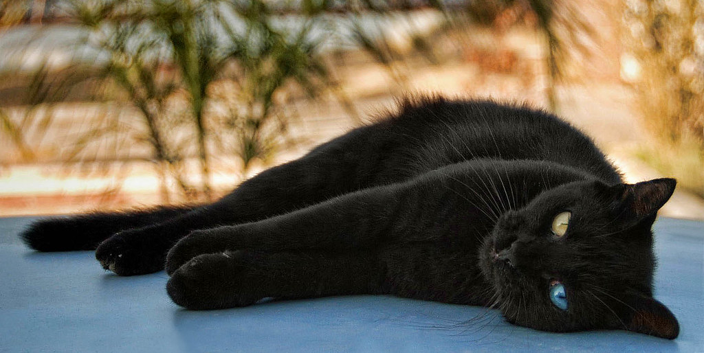 White Cat Black Cat Ksturica