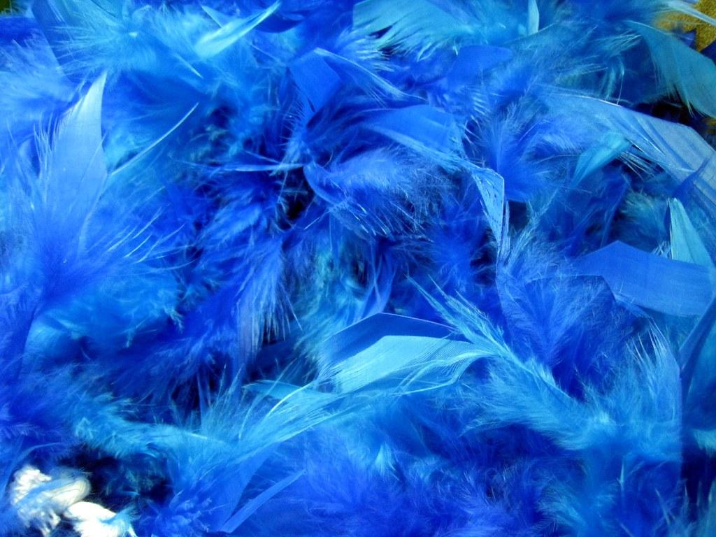 Wallpaper Unique Blue Feather Boa 10 06 08 Today Starts Quot Customer