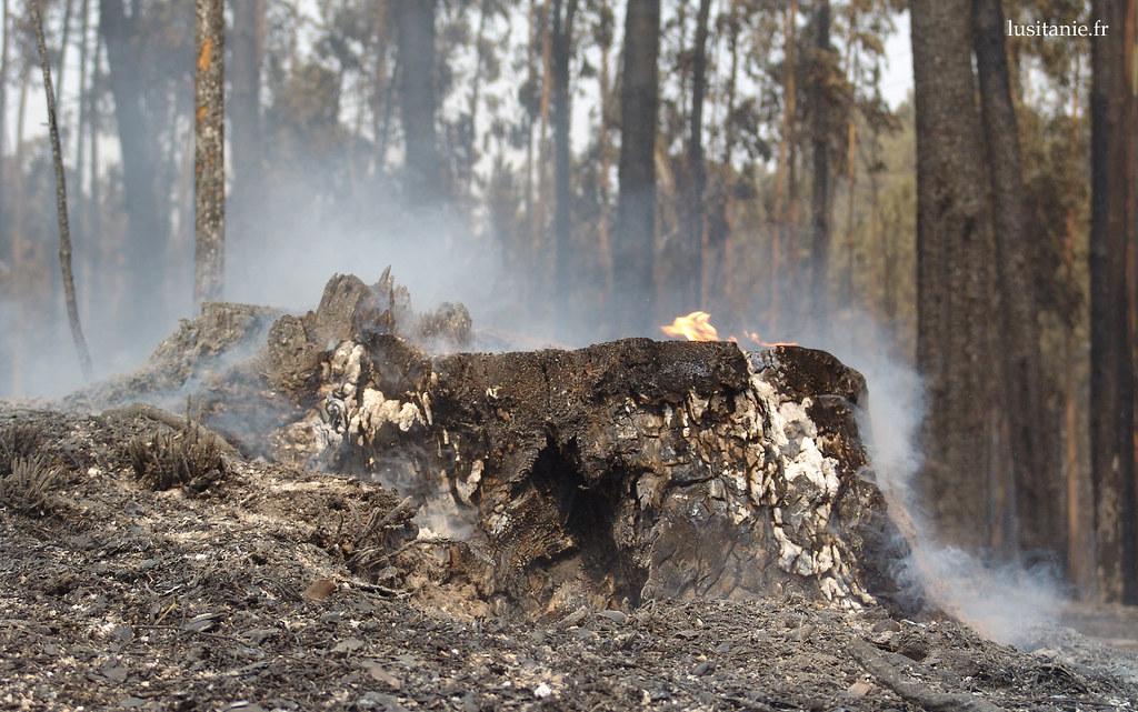 Beaucoup d'arbres ont été abattus pour empêcher la propagation des incendies