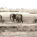Botswana - Elefant&Mud