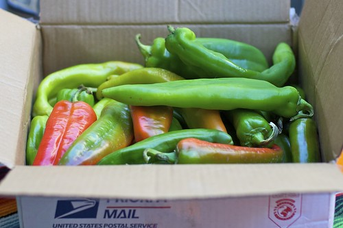 Andy Stone's New Mexican Green Chiles | by bbum