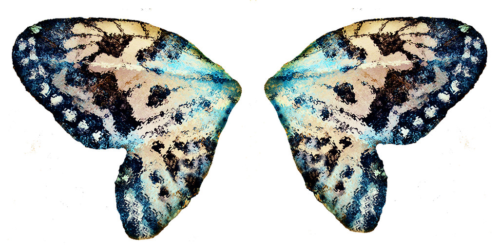 A Pair Of Butterfly Wings | I Took A Photo Of A Butterfly ...