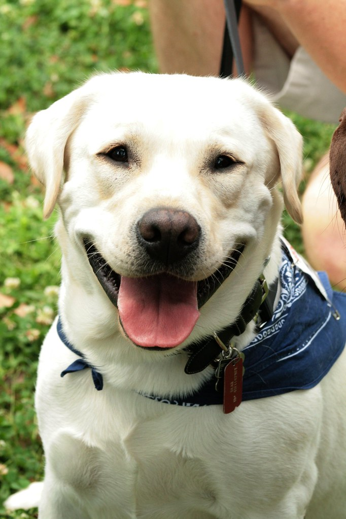 La Spca Dog Day