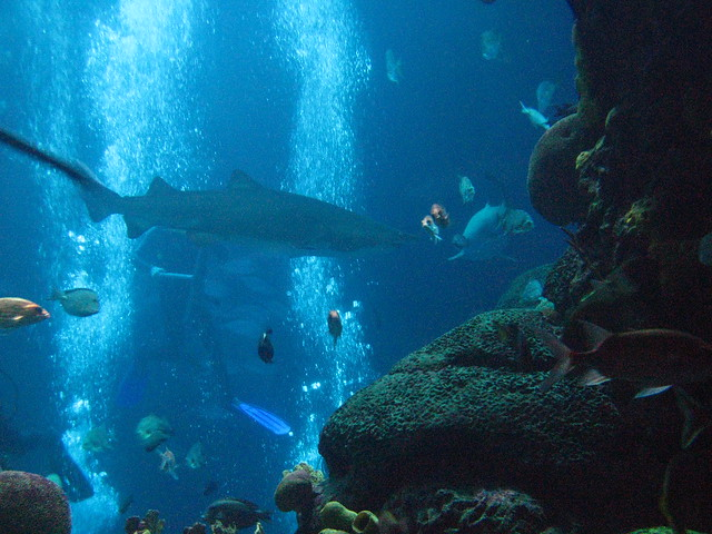 Tennessee Aquarium - Chattanooga TN Flickr - Photo Sharing!