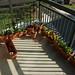 Garden growing!