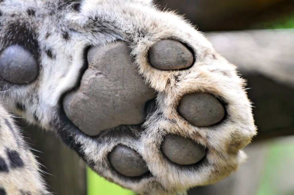 Cat Paw Pad Enlarged White Spots