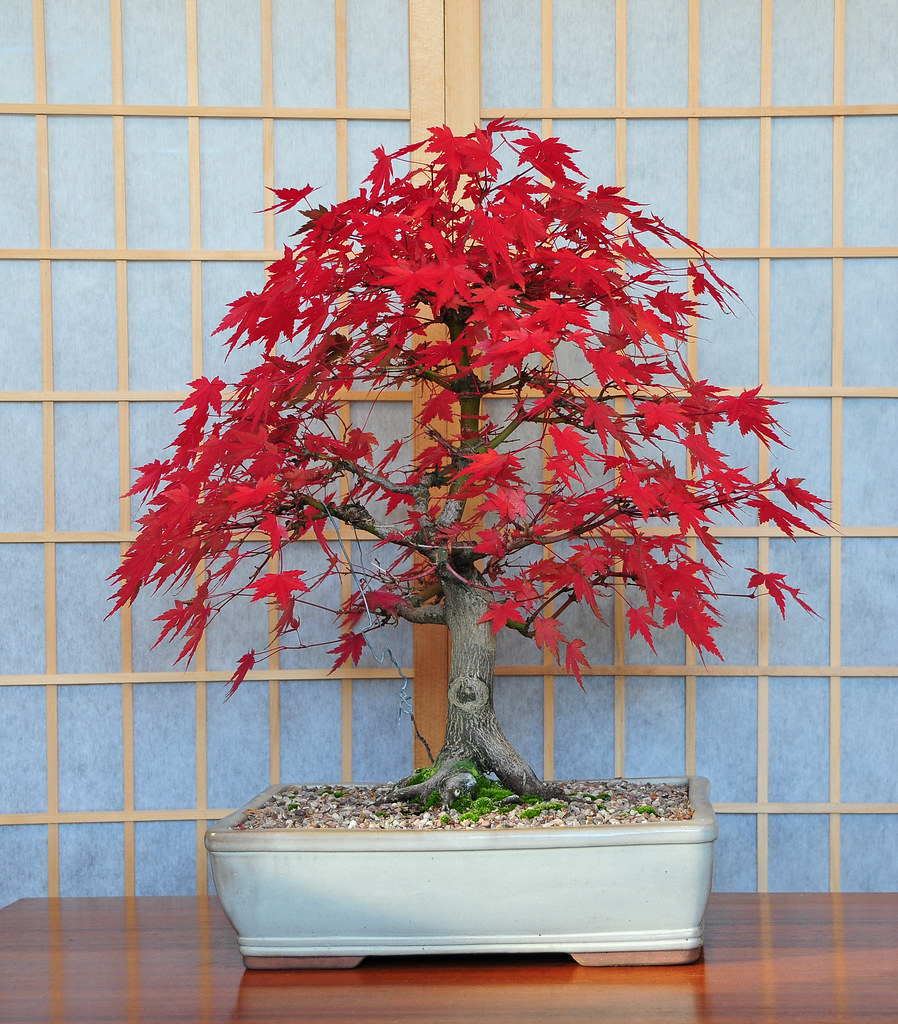 17 Eye Catching Bonsai Decoration Ideas For Indoors - Top Inspirations