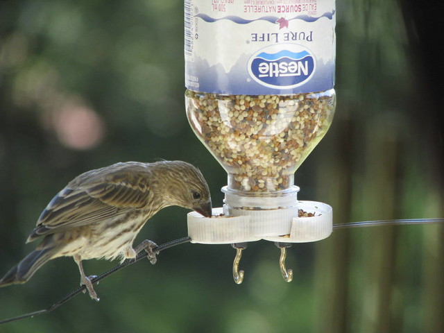 Homemade waterbottle feeder finch using feeder for How to make a bird feeder using a plastic bottle