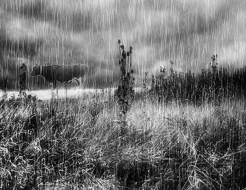 Jerrys baby in the rain. Black and White | Flickr - Photo ...