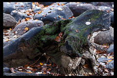 IMG_8982 by svantland