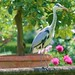 heron in a formal garden setting