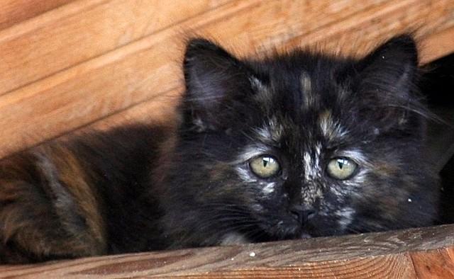 The Sad Kitten A Homeless Kitten Who Lives In An Abandon
