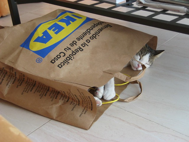 IKEA´S CAT  Victor  Flickr