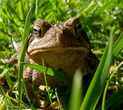 Yes, I'm a toad with a bug on my nose. | by firechicktick