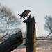 Starling on the post
