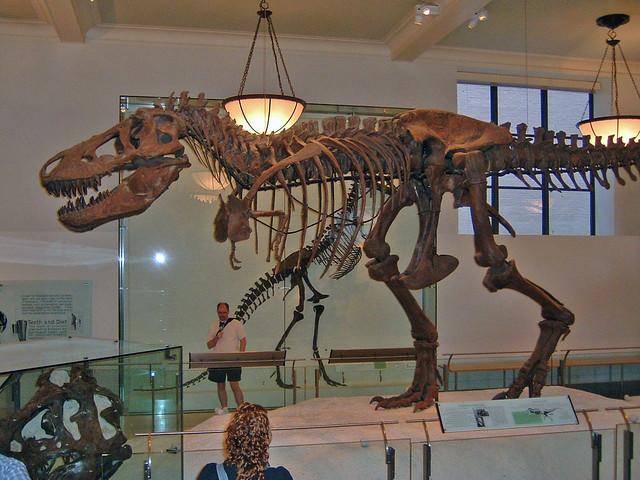 2494669404 83596c21f9 z jpg zz 1Tyrannosaurus Skeleton In Museum