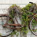 Rusting Bicycle Trellis