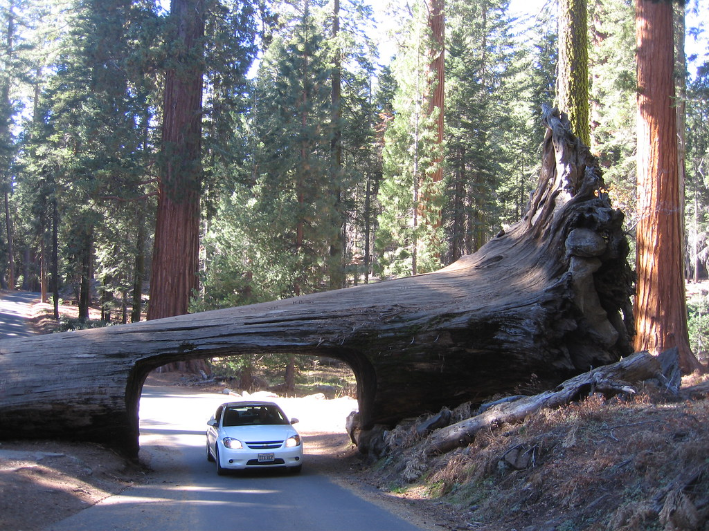 redwood trees california map with 3098296021 on Ultimate Hotel Guide Next California Vacation also 14650 besides Photograph Coastal Redwoods besides Yellowstone National Park further Sequoia National Park Created.