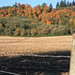 Northwest Fall