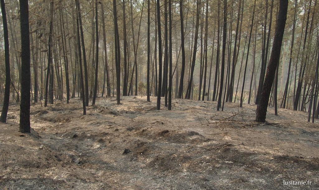 Le sol de la forêt est couvert de cendres