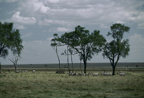 Wildlife on the plains of Kenya | by World Bank Photo Collection