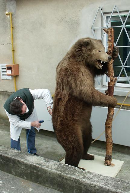 restauration de l 39 ours brun pour en savoir plus sur l 39 ours flickr. Black Bedroom Furniture Sets. Home Design Ideas