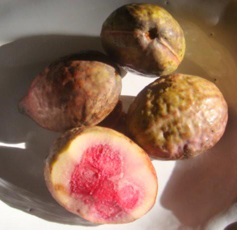 tuna fruit almond fruit