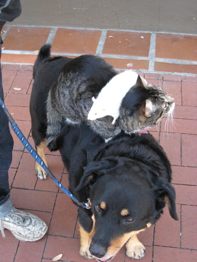 Santa Barbara Dog Friendly Resorts