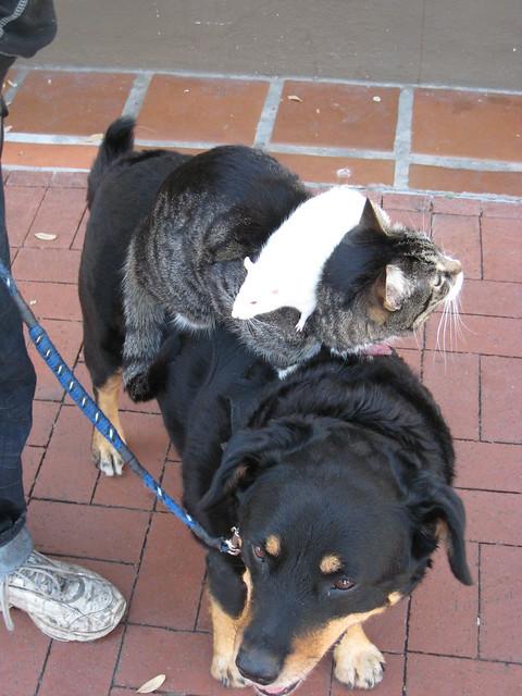 Santa Barbara Dog Cat Rat