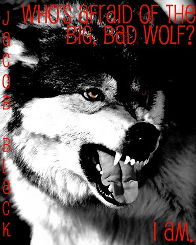 big bad wolf company