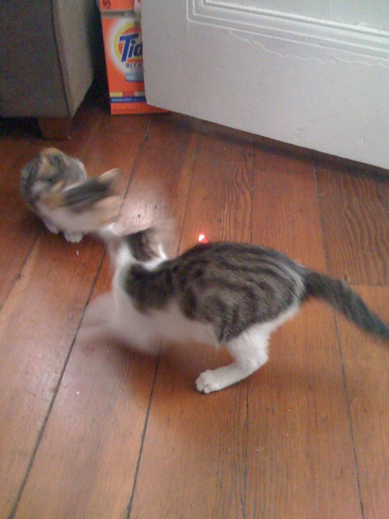 Ninja Cat Pictures