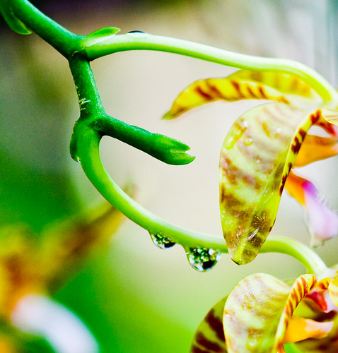 Raindrop / Orchid Bokeh | by LollyKnit