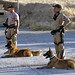 Iraqi Police train working dogs in explosives and narcotics detection