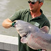 A Blue Catfish