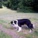 Barney Plays Fetch