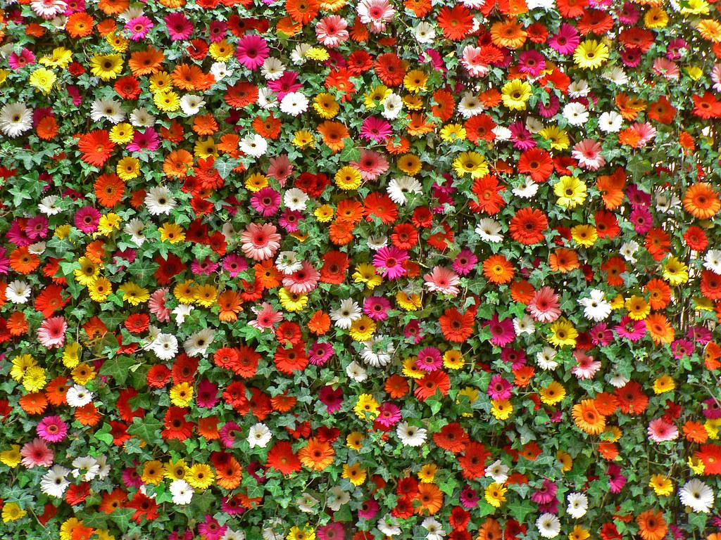 Dior Fashion Show  Flowers