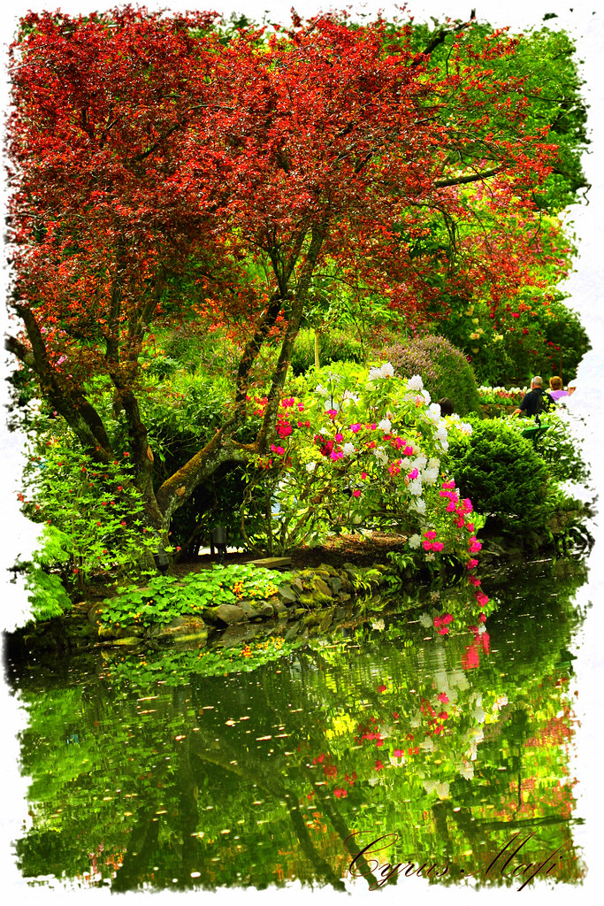 fall in bouchard garden victoria bc