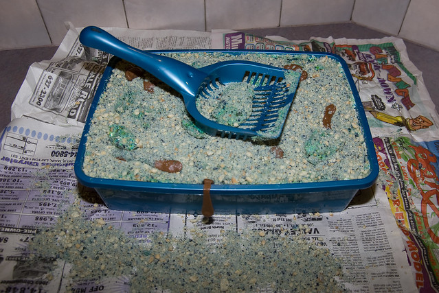 litter box cake cat litter box cake flickr photo 5556